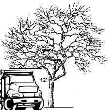 A diagram illustrating how to trim trees.
